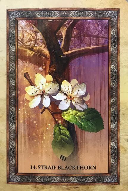 Celtic Tree Oracle Card Dec